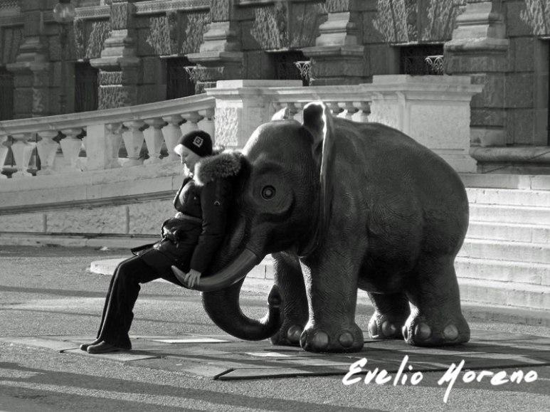 elefantes-en-viena